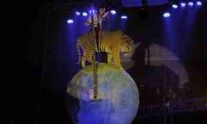 ВАрхангельск приехал цирк Мстислава Запашного