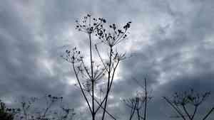 Осеннюю погоду пообещали синоптики жителям Поморья на ближайшие выходные