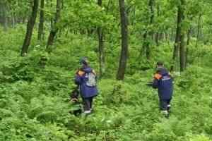 Идет набор добровольцев для участия в поисках пропавших в лесах