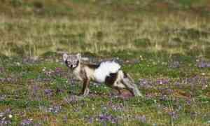2,4 миллиона наизучение фауны Арктики ипаразитов: молодые учёные изАрхангельска получили престижные гранты