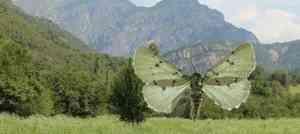 Архангельский учёный открыл новый вид бабочек