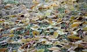 24сентября вАрхангельске будет холодно идождливо