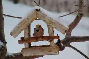 Архангельск вновь присоединится к всероссийской акции «Покормите птиц»