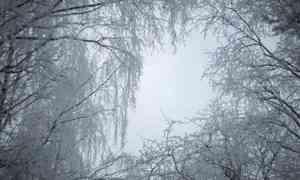 3 декабря в Архангельске будет −4°С