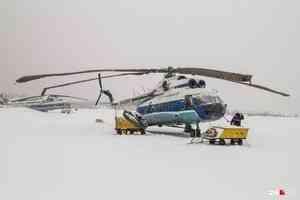 Выслеживать стаю волков в Нёноксе будут с вертолета