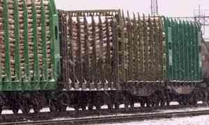 На железнодорожных путях в Онежском районе погиб 15-летний подросток