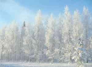 В Поморье похолодает к концу следующей недели