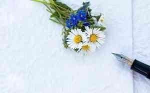 В Архангельской области выбрали «женщину года»