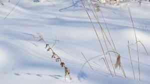 Архангелогородцам пообещали по-весеннему теплые выходные