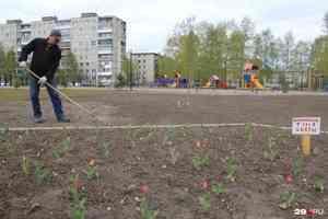 В Архангельске опубликовали итоги голосования за территорию, которую благоустроят в 2021 году