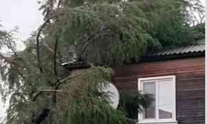 В селе Сура Пинежского района  шторм повалил опоры линий электропередачи, повредил дома и повалил деревья