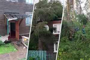 Затопило улицы и повалило деревья: собираем последствия грозы и ливней в Архангельской области