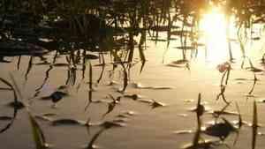 Десятый случай гибели детей на водоемах зафиксирован в Поморье