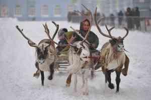 В Норильске исследовали влияние разлива топлива на жизнь коренных народов
