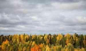 23 сентября в Архангельске ожидается +12°С