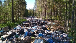 Двенадцать лесных свалок ликвидированы в Онежском районе