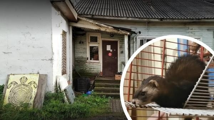В подвешенном состоянии: архангельский приют для диких животных ищет новый дом