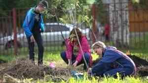 Более 6 тысяч деревьев высадят в следующем году в Архангельске