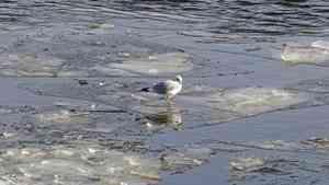 Северная Двина в акватории порта Архангельск очистится ото льда через пять дней