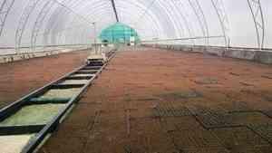 Вельский тепличный комплекс выращивает более 500 тысяч сеянцев ели и сосны в год