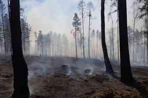 В Архангельской области усилено патрулирование лесов