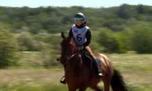 В Архангельске прошли соревнования по спортивному ориентированию на лошадях