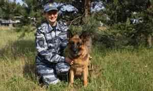 В Архангельске служебная собака по кличке Цукини помогла задержать грабителя
