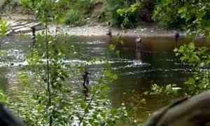 Рыбоохрана и полиция провели рейд на реке Солзе в Приморском районе
