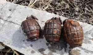 ВПлесецком районе местные жители обнаружили целый арсенал боеприпасов времён Первой мировой войны