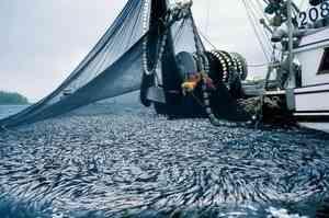 Суперсовременный траулер-процессор «Норвежское море» передан АТФ