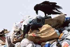 Архангельские депутаты пытаются запретить ввоз мусора в регион
