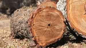 Следственный комитет проверит гибель лесоруба в Холомогорском районе