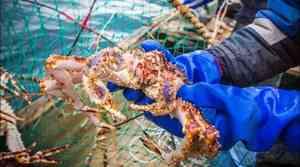 Законопроект о крабовых аукционах создаёт угрозы для всей рыбной отрасли