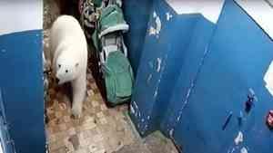 Причинами нашествия белых медведей на Новой земле стали изменение климата и мусор