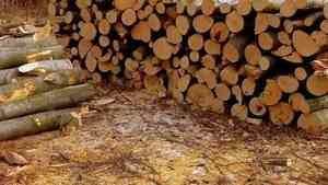 Спикер Совета федерации предлагает ввести эмбарго на экспорт леса из России