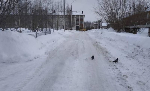 С дорог Архангельска вывезли 4830 кубометров снега