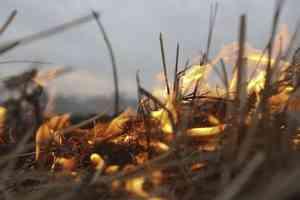 В Поморье произошёл первый в этом году пожар из-за сухой травы