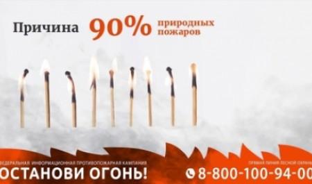 В Архангельской области зафиксировали 117 поджогов сухой травы
