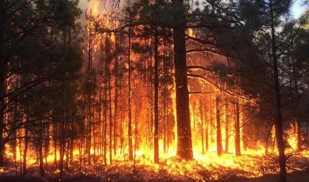 На юге Поморья установлен наивысший класс пожарной опасности