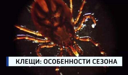 Более тысячи жителей Архангельской области пострадали отклещей сначала этого сезона