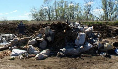 Сгнившие трупы животных вкилометре отпосёлка Луговой вПриморском районе обнаружили специалисты Россельхознадзора