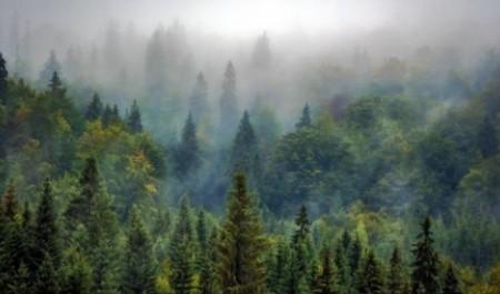 ГК «Титан» поддерживает совершенствование «лесного» законодательства в Поморье