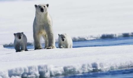 «Оскар» для «арктического» учёного: в Архангельске стартовал научный саммит
