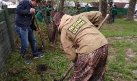 Всероссийский день посадки леса в Архангельской области – акция продолжается