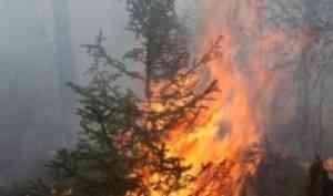 МЧС предупреждает: в лесах Архангельской области установился наивысший класс пожарной опасности