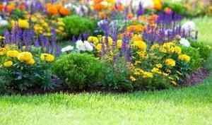 Садовые цветы - яркий праздник жизни