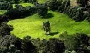 «Память» ландшафта помогла учёным идентифицировать заброшенные сто лет назад пашни и перелоги на севере Кенозерья