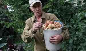 Идём за грибами. Как не стать жертвами лесной добычи