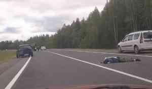 ДТП вХолмогорском районе унесло жизнь грибника