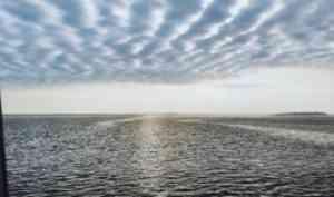 В рамках реализации международного научно-образовательного проекта «Еще больше о море» в САФУ прошел Международный День немецкого языка